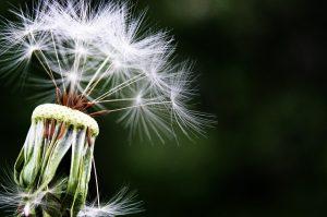 raleigh allergy test